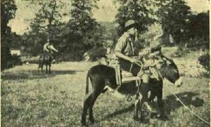 Jezdectvo Morinje